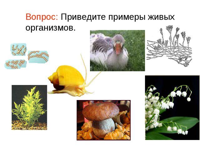 Вопрос: Приведите примеры живых организмов.