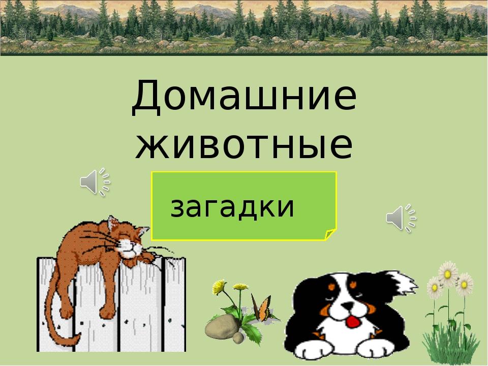 Домашние животные загадки