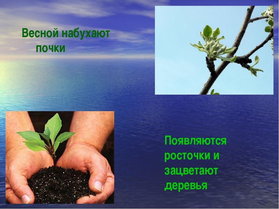 Весной набухают почки Появляются росточки и зацветают деревья