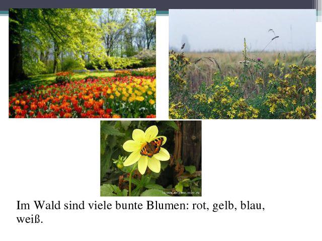 Im Wald sind viele bunte Blumen: rot, gelb, blau, weiß.