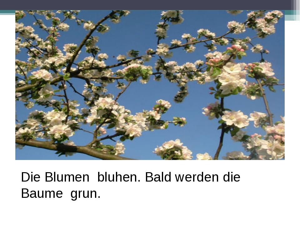 Die Blumen bluhen. Bald werden die Baume grun.