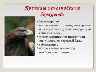 Причины исчезновения беркутов: браконьерство; использование пестицидов (скорл