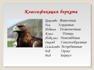Классификация беркута Царство Животные Тип Хордовые Подтип Позвоночные Класс