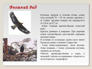 Внешний вид Бе́ркут (лат. Aquila chrysaetos)— большая, крепкая и сильная пт