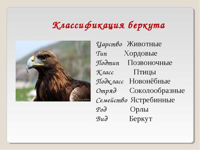 Классификация беркута Царство Животные Тип Хордовые Подтип Позвоночные Класс...
