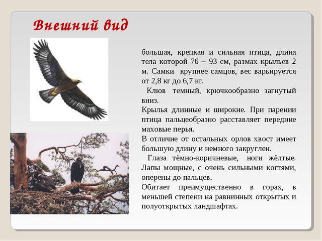 Внешний вид Бе́ркут (лат. Aquila chrysaetos)— большая, крепкая и сильная пт...