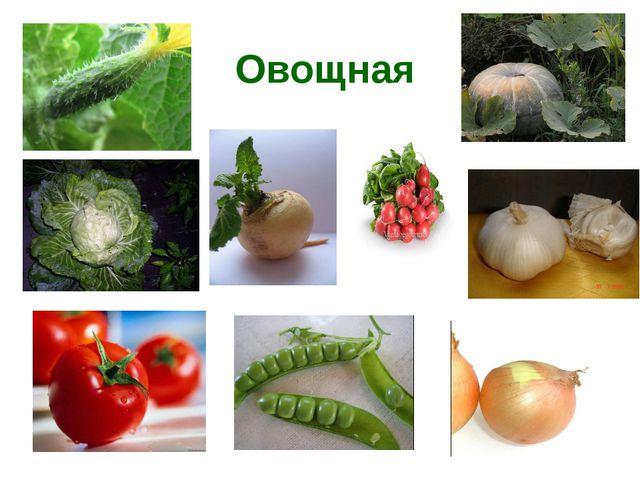 Овощная