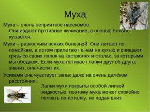 Муха Муха – очень неприятное насекомое. Они издают противное жужжание, а осен