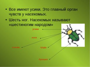 Все имеют усики. Это главный орган чувств у насекомых. Шесть ног. Насекомых н