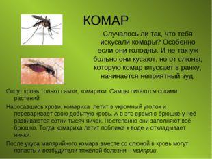 КОМАР Сосут кровь только самки, комарихи. Самцы питаются соками растений Насо