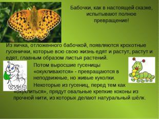 Бабочки, как в настоящей сказке, испытывают полное превращение! Из яичка, отл