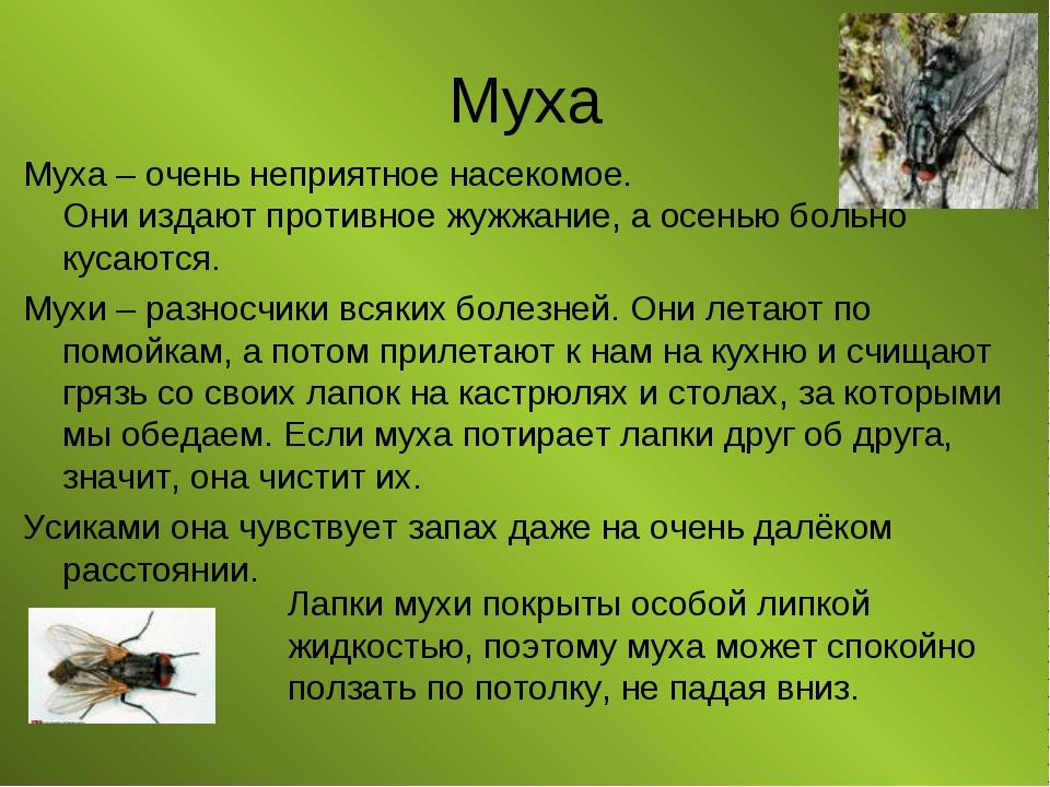 Муха Муха – очень неприятное насекомое. Они издают противное жужжание, а осен...