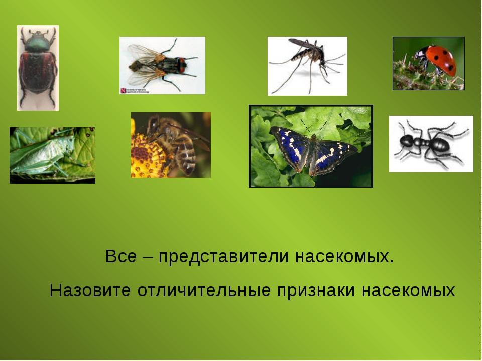 Все – представители насекомых. Назовите отличительные признаки насекомых