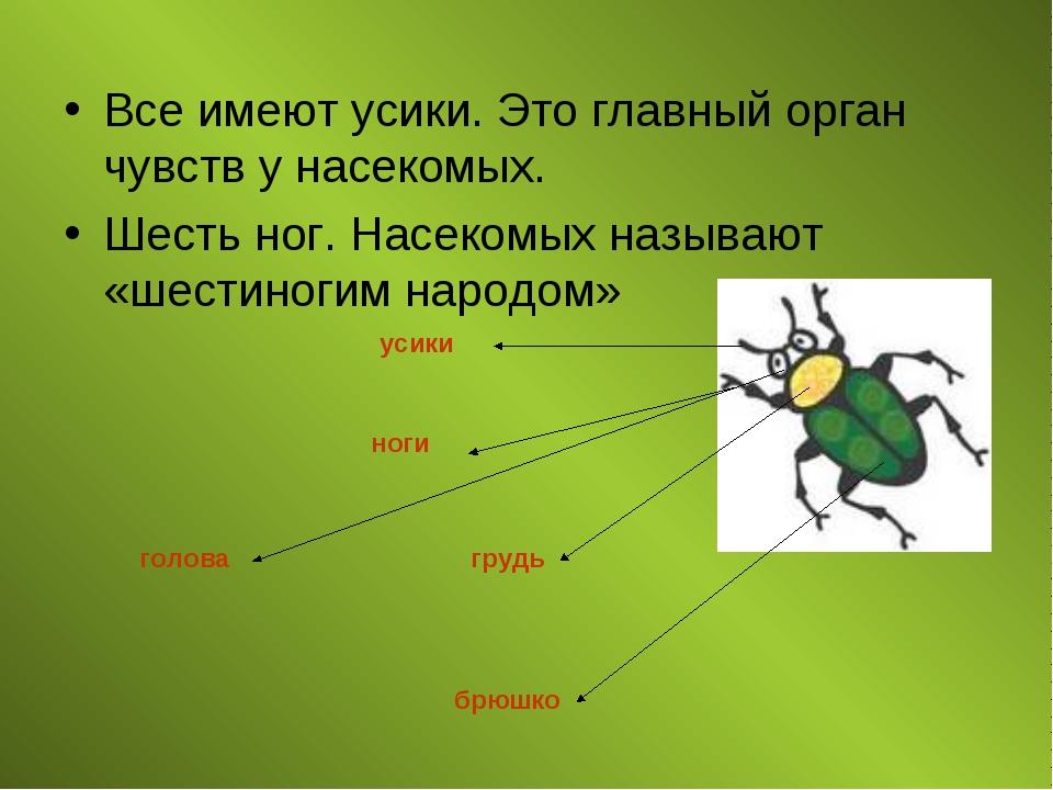 Все имеют усики. Это главный орган чувств у насекомых. Шесть ног. Насекомых н...