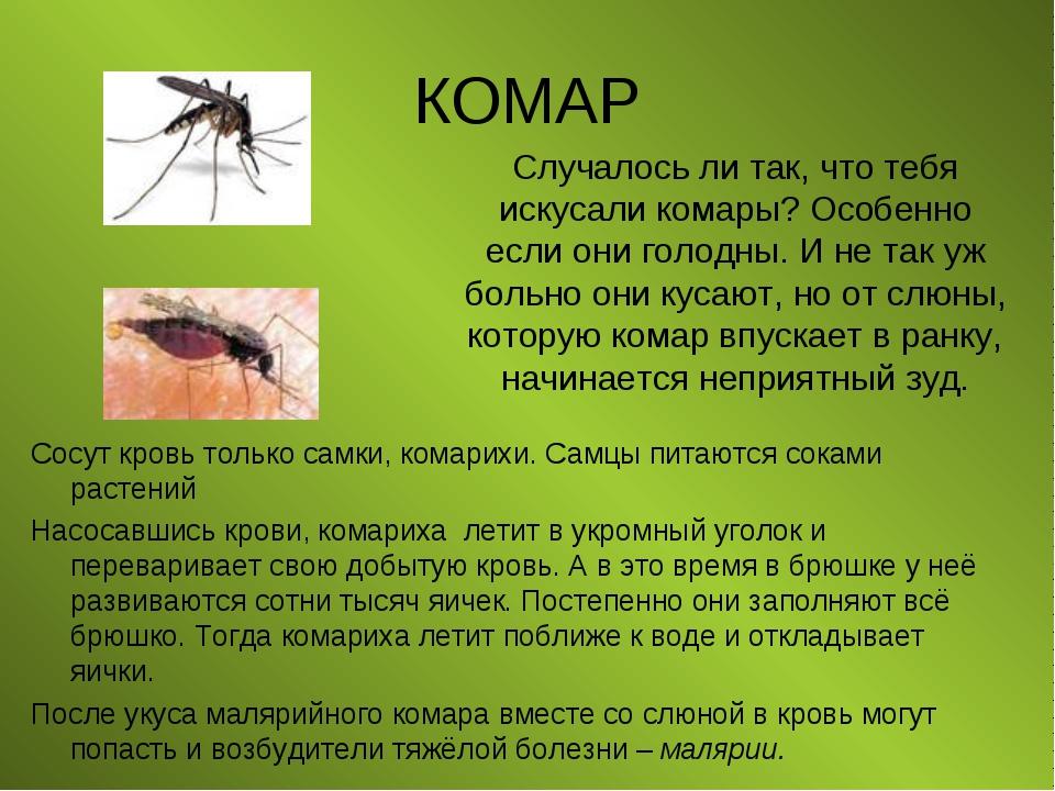 КОМАР Сосут кровь только самки, комарихи. Самцы питаются соками растений Насо...