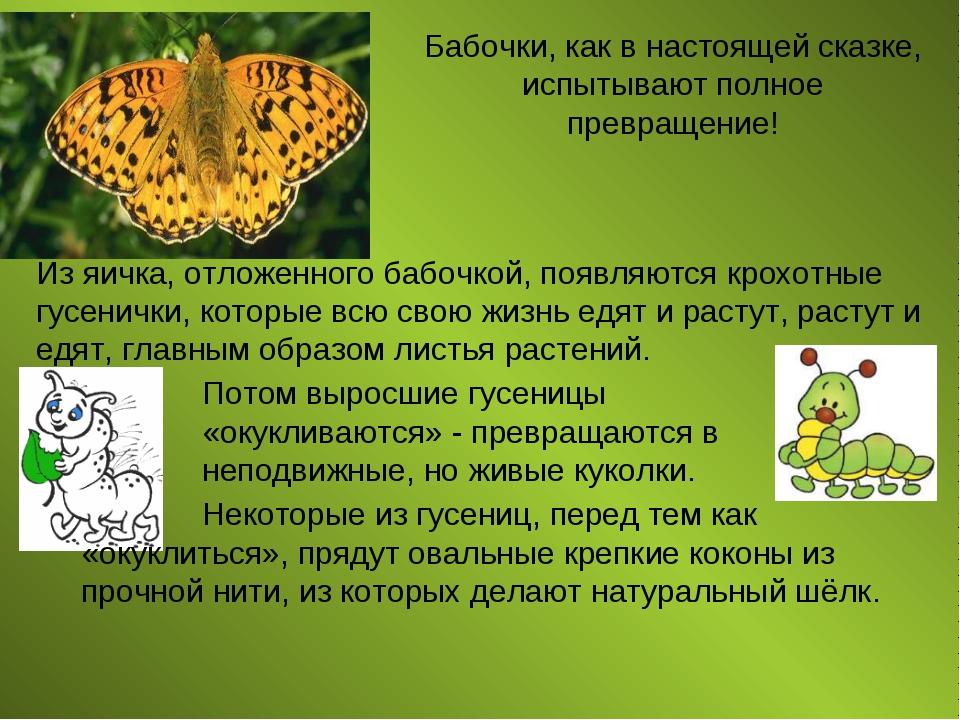 Бабочки, как в настоящей сказке, испытывают полное превращение! Из яичка, отл...