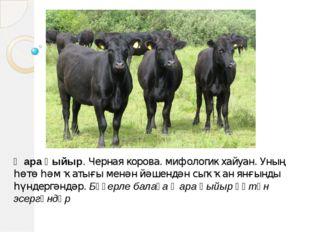 Ҡара һыйыр. Черная корова. мифологик хайуан. Уның һөтө һәм ҡатығы менән йәшен