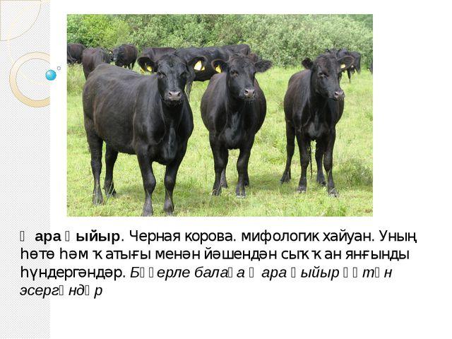 Ҡара һыйыр. Черная корова. мифологик хайуан. Уның һөтө һәм ҡатығы менән йәшен...