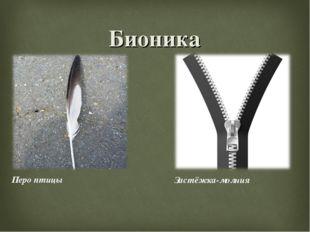 Бионика Перо птицы Застёжка-молния