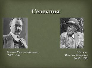 Селекция Вавилов Николай Иванович (1887 – 1943) Мичурин Иван Владимирович (18