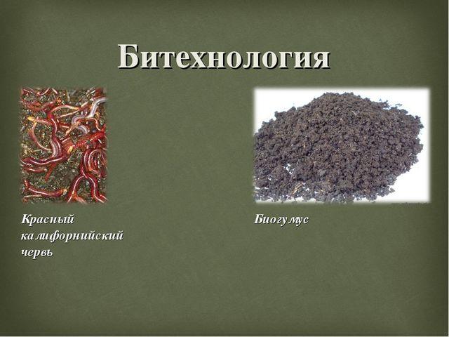 Битехнология Красный калифорнийский червь Биогумус