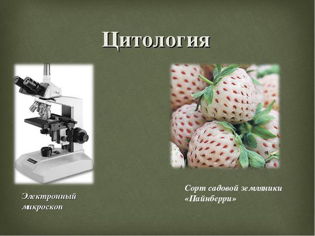 Цитология Электронный микроскоп Сорт садовой земляники «Пайнберри»
