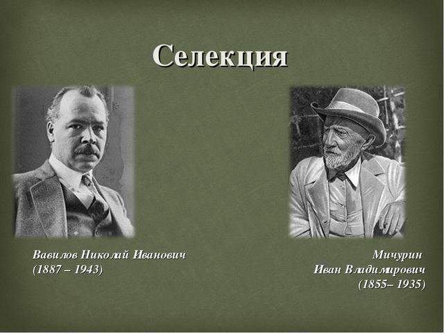 Селекция Вавилов Николай Иванович (1887 – 1943) Мичурин Иван Владимирович (18...