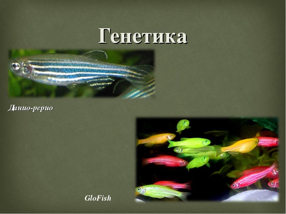 Генетика Данио-рерио GloFish