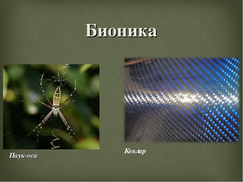 Бионика Паук-оса Кевлар