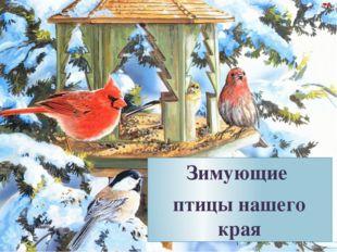 Зимующие птицы нашего края