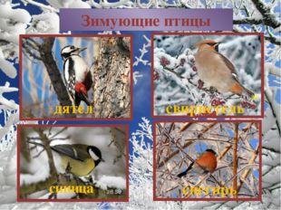 Зимующие птицы синица снегирь дятел свиристель