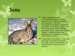 Заяц Зайцы придерживаются кустарниковых зарослей или редкого леса, избегая от