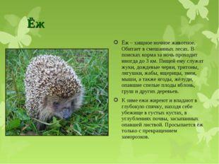 Ёж Ёж – хищное ночное животное. Обитает в смешанных лесах. В поисках корма за