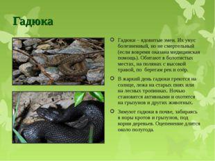 Гадюка Гадюки – ядовитые змеи. Их укус болезненный, но не смертельный (если в