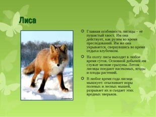 Лиса Главная особенность лисицы – её пушистый хвост. Им она действует, как ру