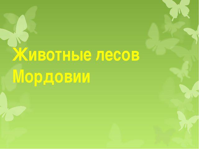 Животные лесов Мордовии