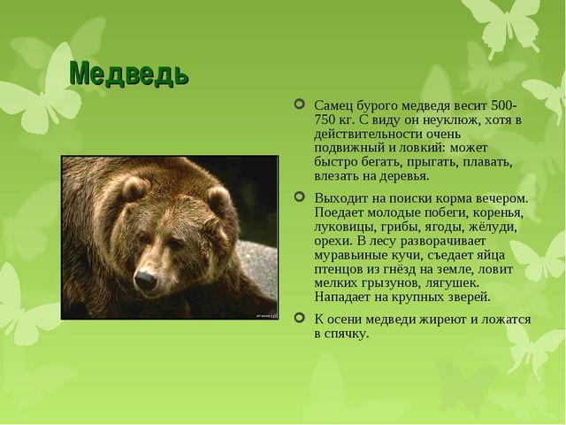Медведь Самец бурого медведя весит 500-750 кг. С виду он неуклюж, хотя в дейс...