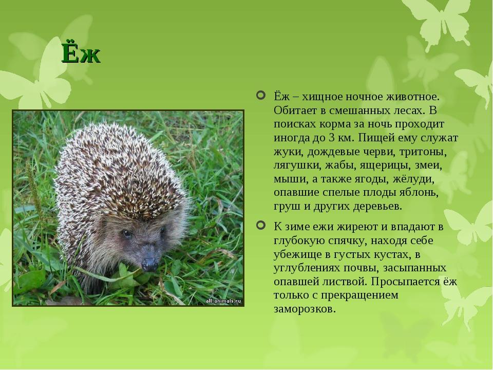 Ёж Ёж – хищное ночное животное. Обитает в смешанных лесах. В поисках корма за...