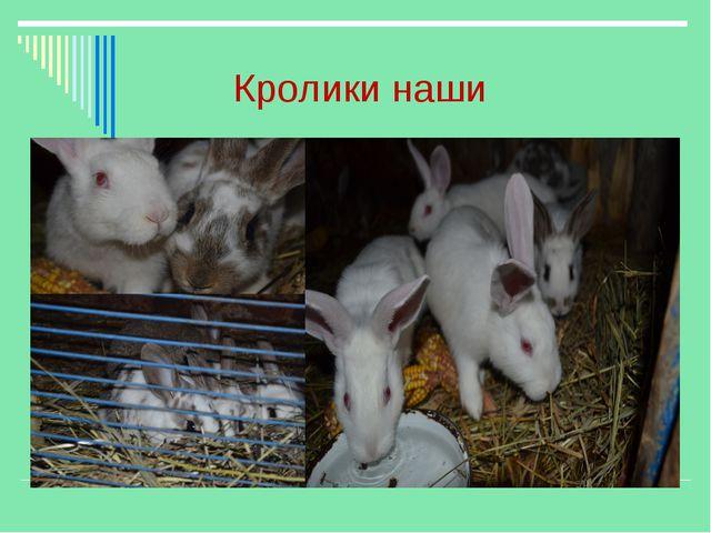 Кролики наши