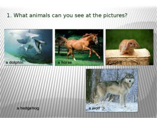 1. What animals can you see at the pictures? a dolphin a hedgehog a rabbit a