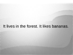 It lives in the forest. It likes bananas.