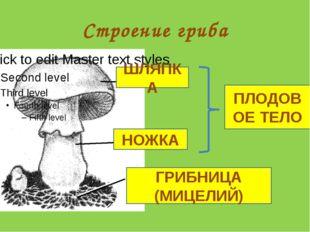 Строение гриба ШЛЯПКА НОЖКА ГРИБНИЦА (МИЦЕЛИЙ) ПЛОДОВОЕ ТЕЛО