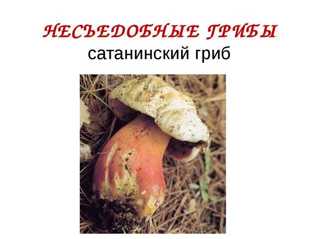 НЕСЪЕДОБНЫЕ ГРИБЫ сатанинский гриб