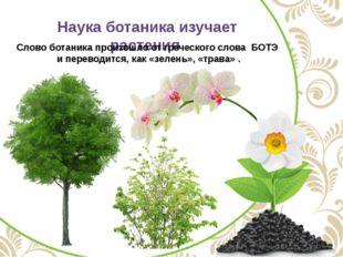 Наука ботаника изучает растения Слово ботаника произошло от греческого слова