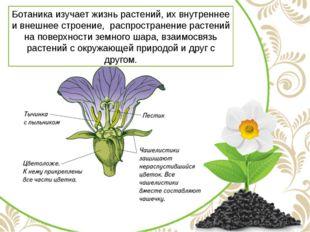 Ботаника изучает жизнь растений, их внутреннее и внешнее строение, распростра