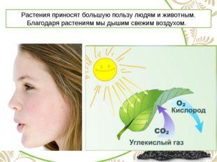 Растения приносят большую пользу людям и животным. Благодаря растениям мы дыш