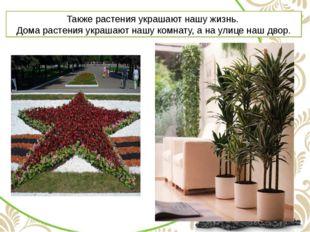 Также растения украшают нашу жизнь. Дома растения украшают нашу комнату, а на