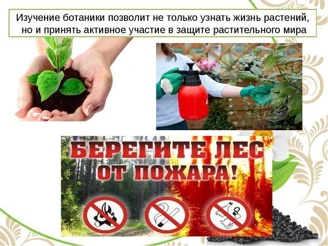 Изучение ботаники позволит не только узнать жизнь растений, но и принять акти...