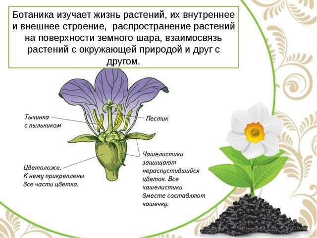 Ботаника изучает жизнь растений, их внутреннее и внешнее строение, распростра...