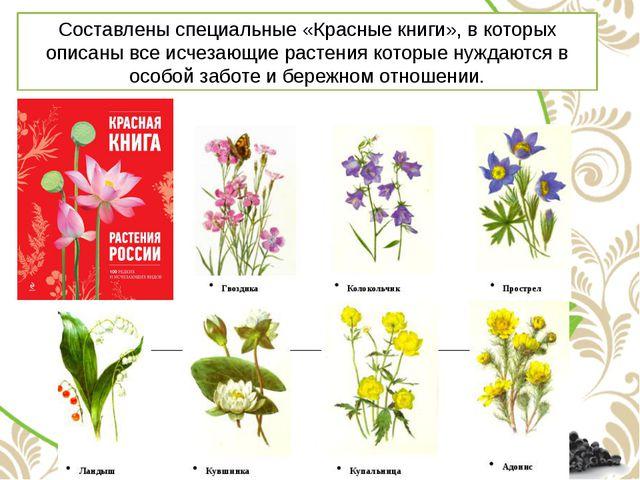 Составлены специальные «Красные книги», в которых описаны все исчезающие раст...